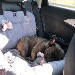 kutyaülés autóba