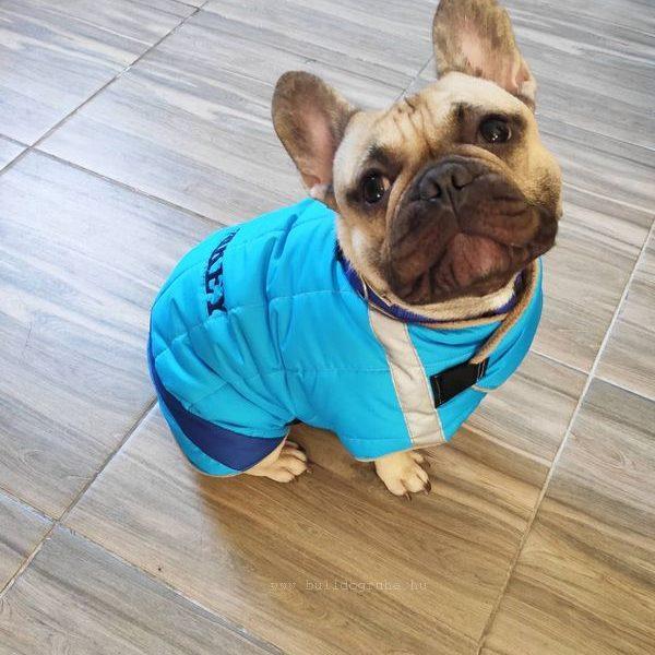 bulldog kabát