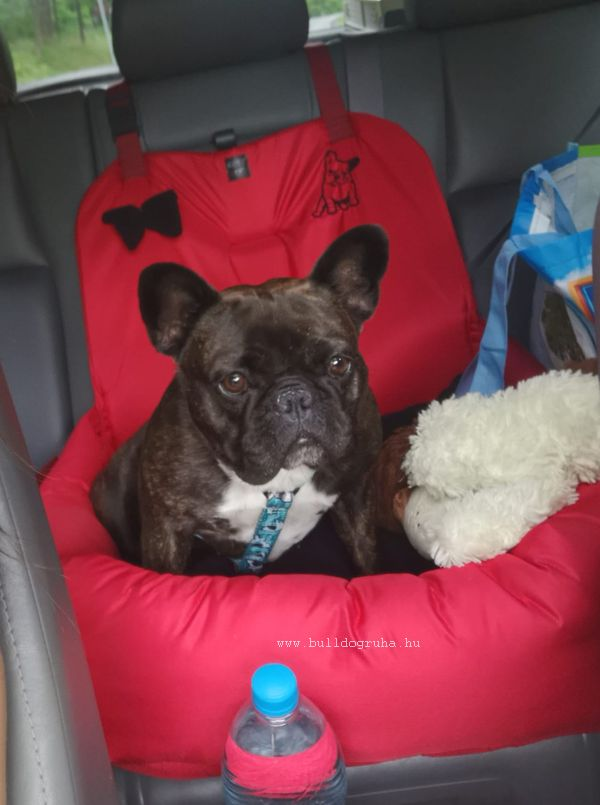 Bulldogülés , kutyaülés autóba