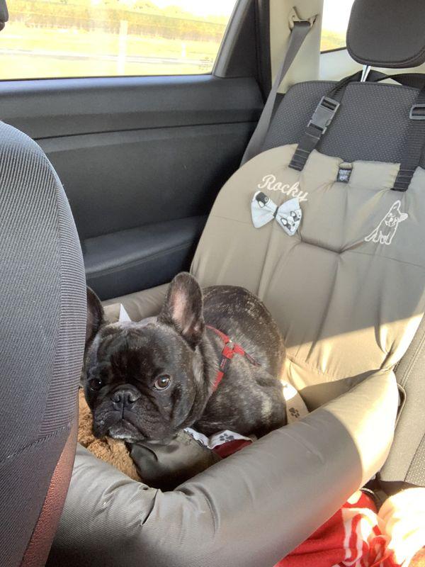 bulldogülés autóba